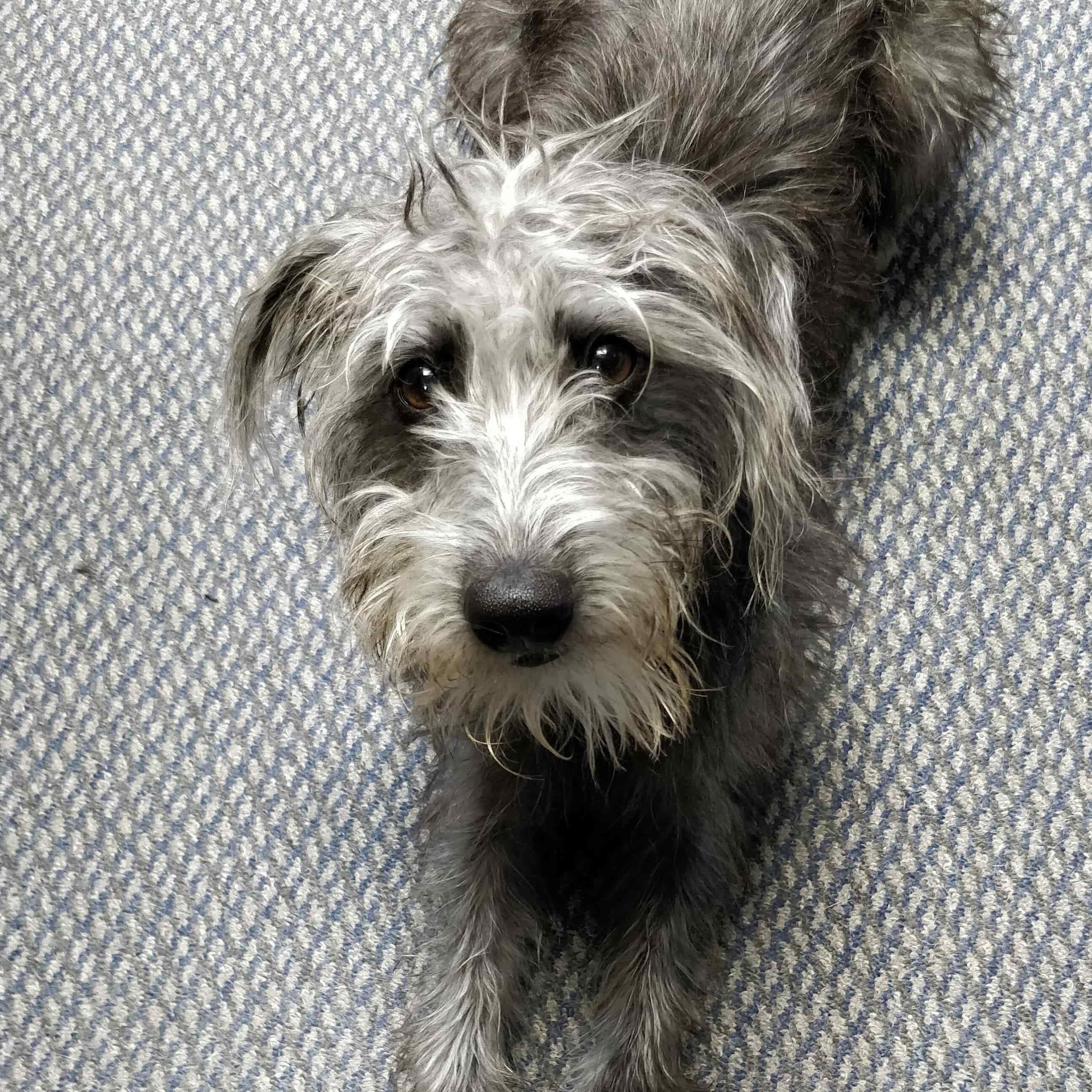 Maud (Dog)
