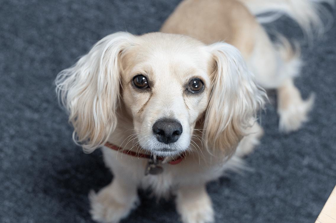 Moya (Dog)
